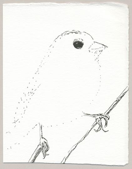 Translucent Sparrow